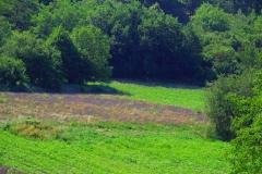 couvent-des-minimes-surplomb-de-champs-de-lavande-printemps
