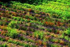 couvent-des-minimes-surplomb-de-champs-printemps