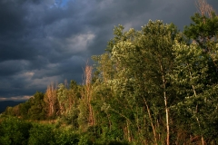 luberon-paysage-arbres-argentes
