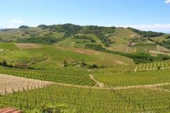 Vignoble Pira - parcelles Rionda Barolo Serralunga